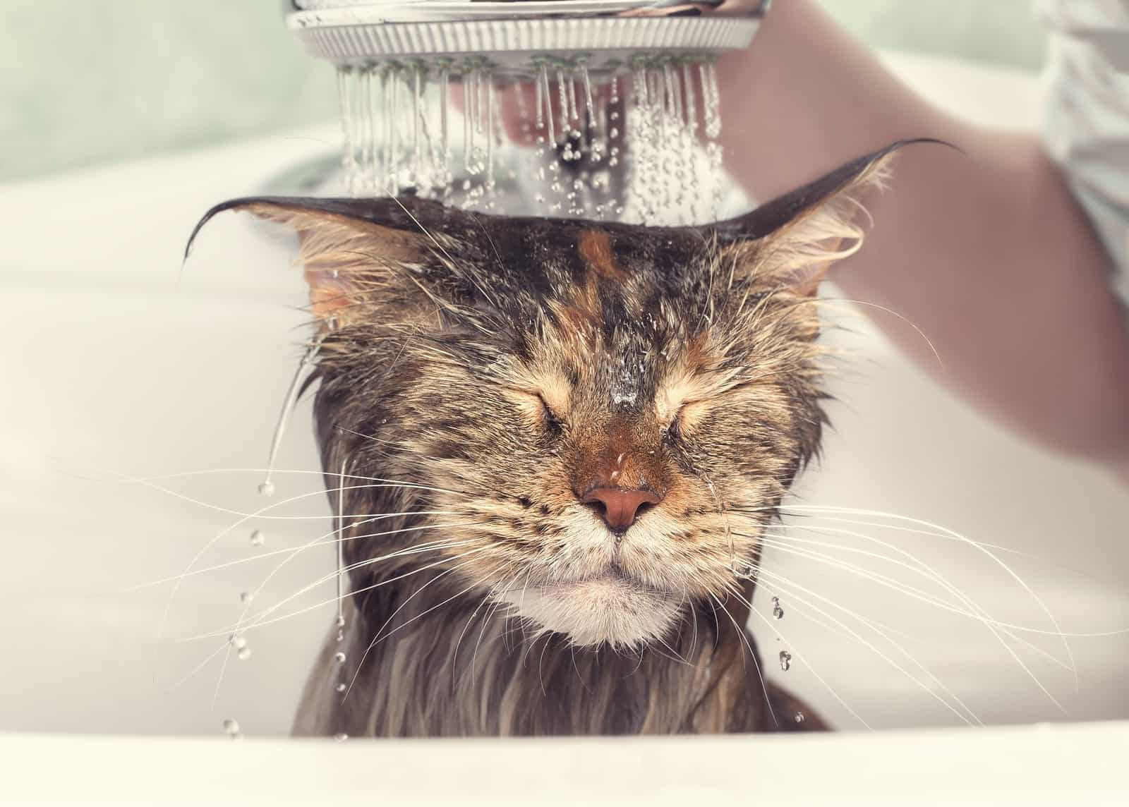 why do cats hate water