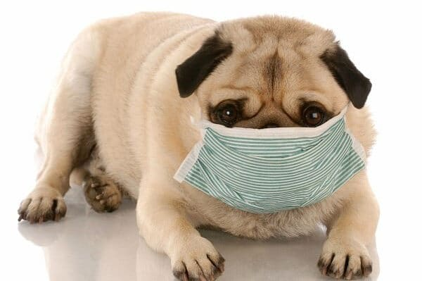 Kennel Cough Treatment — 4 Home Remedies for Kennel Cough